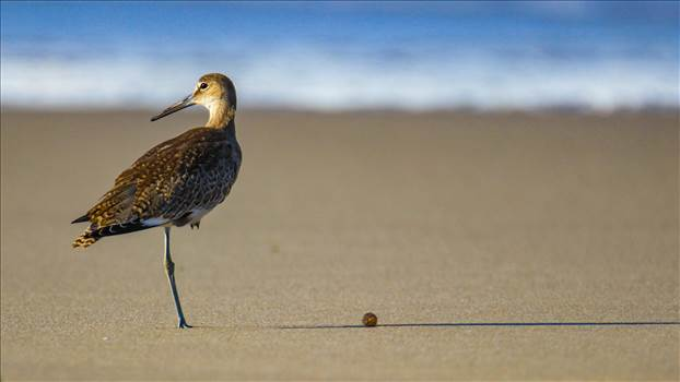 Sandpiper1.jpg by WPC-452