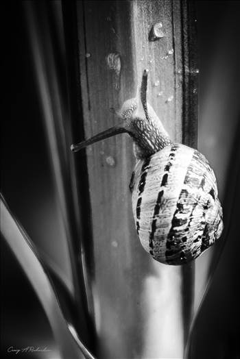 Brian The Snail. by Craig A Richardson Photography