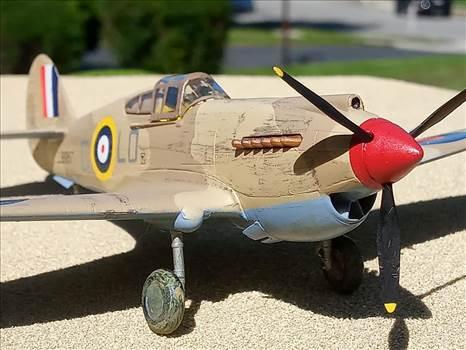 Hawk6.jpg by ScottUehl