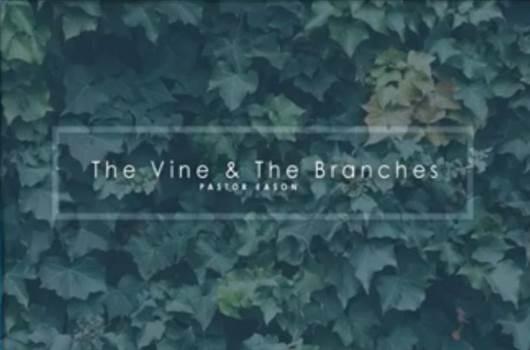 vine.JPG by lifecovenant