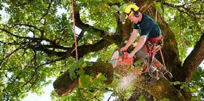 Tree service near me by Treeservicenearme
