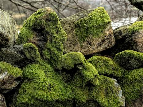 wall and moss.jpg by WPC-208