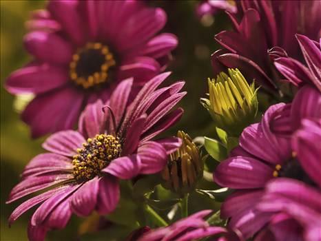 flowers.jpg by WPC-208
