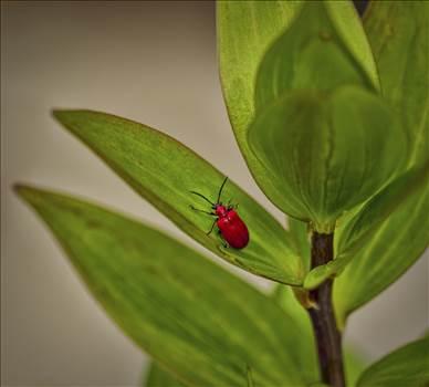 lily leaf.jpg by WPC-208