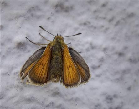 Butterfly macro.jpg by WPC-208