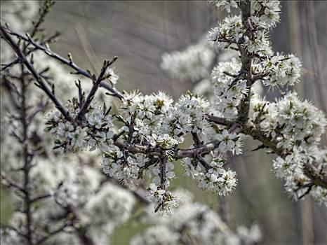 blossom.jpg by WPC-208