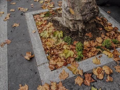 leaves.jpg by WPC-208