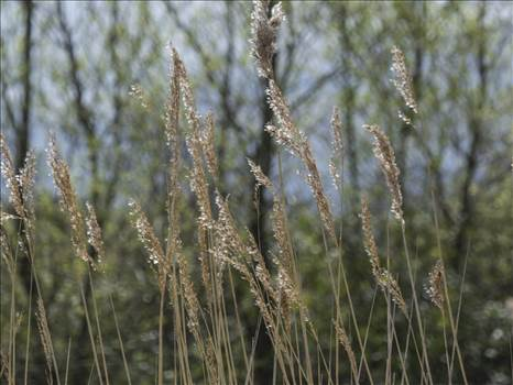 grasses.jpg by WPC-208