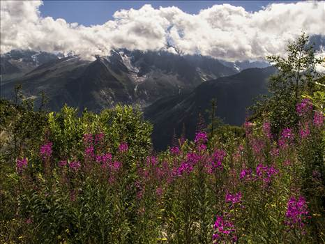 flower and mountains 2.jpg by WPC-208