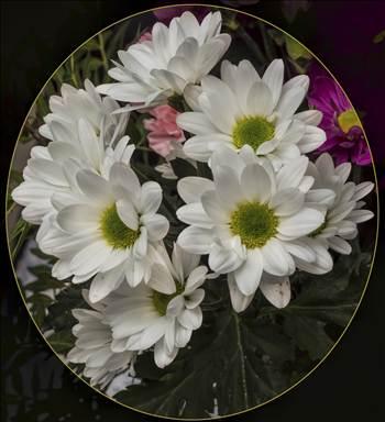 Chrysanthemum arrangement.jpg by WPC-208