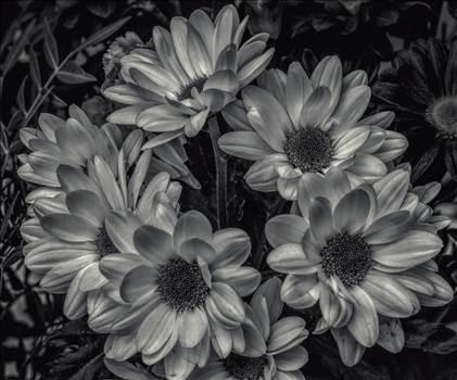 Bloom in Black.jpg by WPC-208