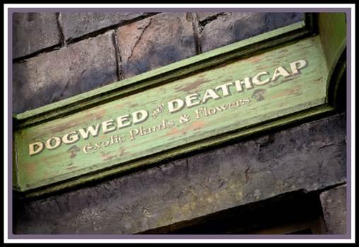 DogweedampDeacaps.jpg by Charbonne