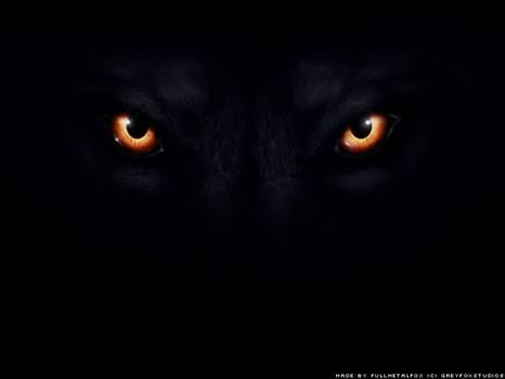 __Wolf_Eyes___by_Fullmetal_Fox.jpg by Charbonne