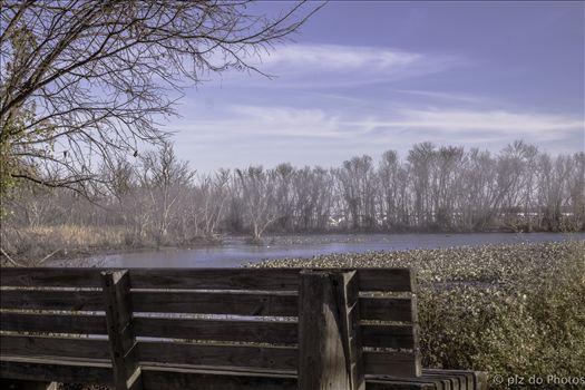 Fog on the Potomac by Patricia Zyzyk