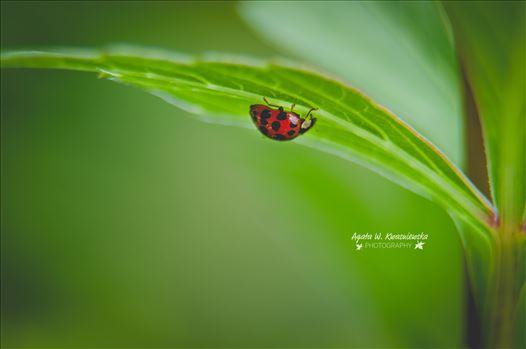 10 by Agata W. Kwasniewska Photography