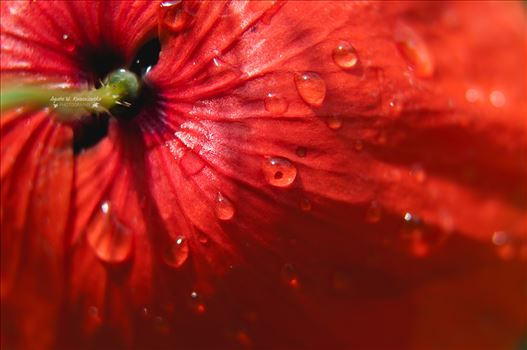 Droplets by Agata W. Kwasniewska Photography