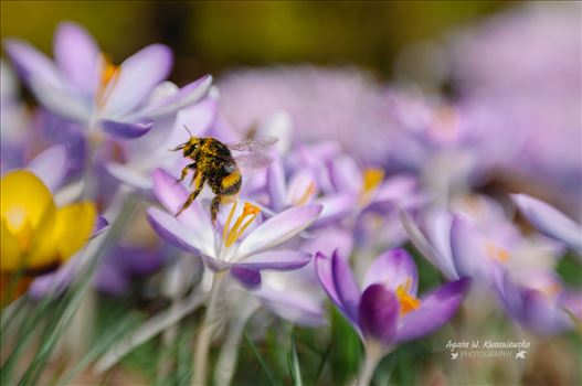 12 by Agata W. Kwasniewska Photography