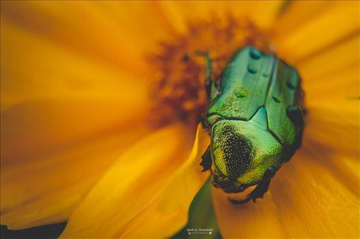 04 by Agata W. Kwasniewska Photography