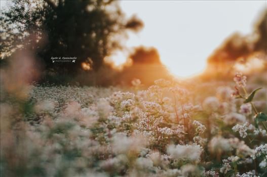 Dreamy light -