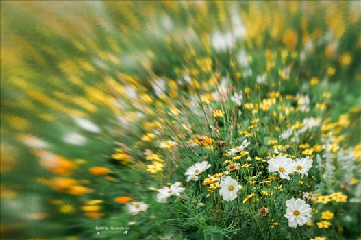 Flower meadow by Agata W. Kwasniewska Photography