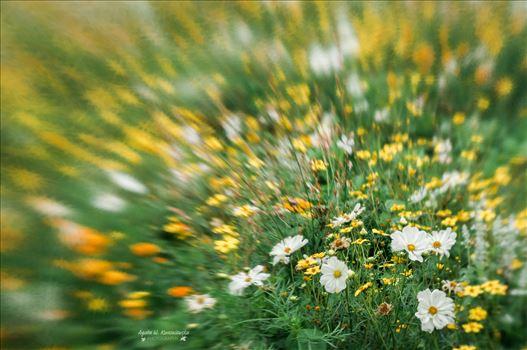 Flower meadow by Agata W. Kwasniewska Photography