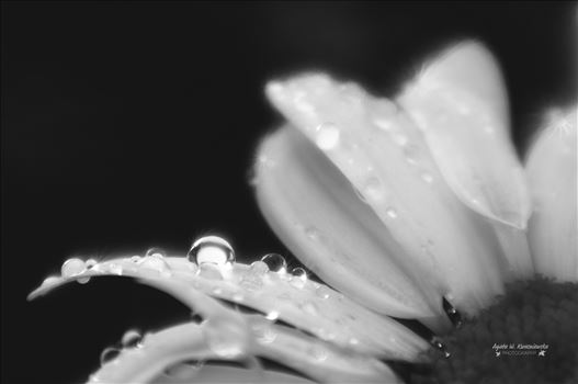 Morning dew by Agata W. Kwasniewska Photography