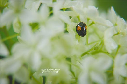 07 by Agata W. Kwasniewska Photography