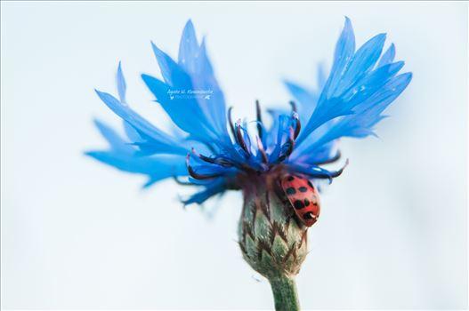 05 by Agata W. Kwasniewska Photography