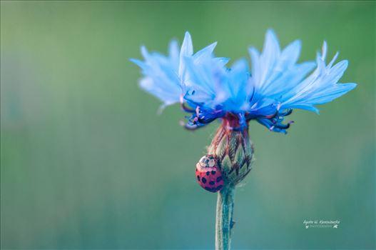 02 by Agata W. Kwasniewska Photography