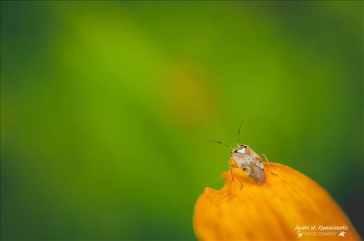 03 by Agata W. Kwasniewska Photography