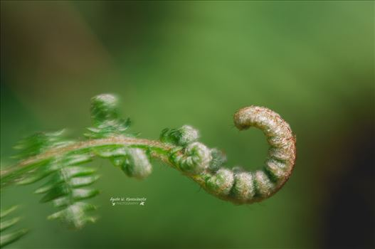 New life by Agata W. Kwasniewska Photography