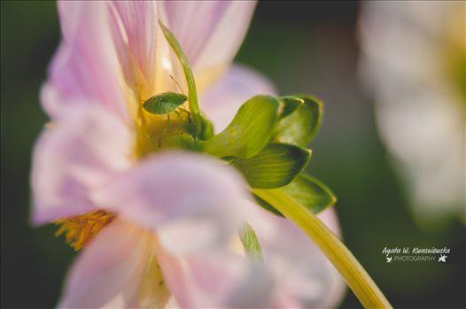 06 by Agata W. Kwasniewska Photography