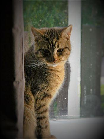 Portrait of a Cat -