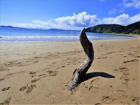 Beach and driftwood sculpture by Lewis & Co. Photography