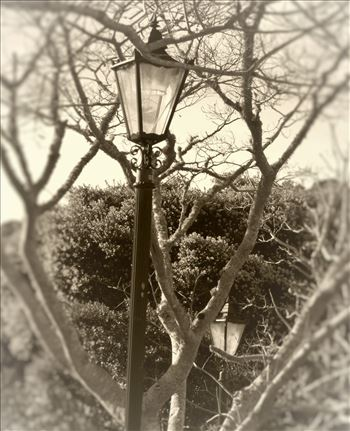 Lamp posts -
