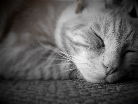 Let sleeping cats lie!! -