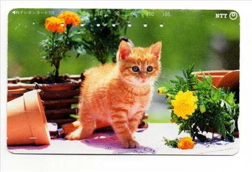 NTT Kitten With Flowerpots PW-TC-040.jpg by whitetaylor