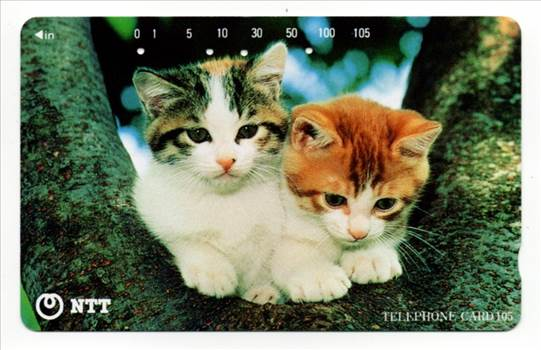 NTT Two Cats Between Two Branches of a Tree PW-TC025.jog.jpg by whitetaylor