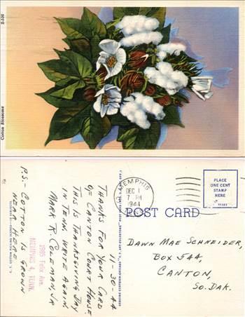 Cotton Blossom Scenes MR053.jpg by whitetaylor
