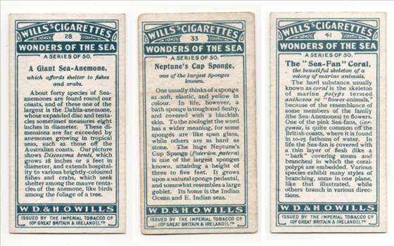 Wills Wonders Of The Sea Back CC0263.jpg by whitetaylor