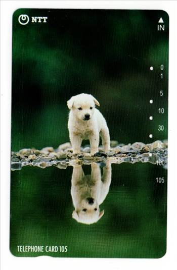 NTT Puppy And Reflection On A Lake PW-TC-044.jpg by whitetaylor