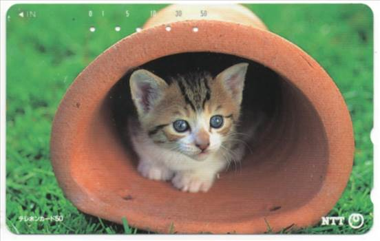 NTT Kitten In A Flower Pot PW-TC017.jpg by whitetaylor