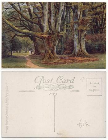 Giant Beeches New Forest PW0815.jpg by whitetaylor