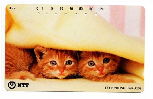 NTT Two Kittens Under A Blanket PW-TC-034.jpg by whitetaylor