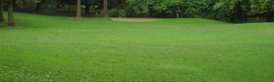 lawn by forbidden forest.jpg by CraftyQueen