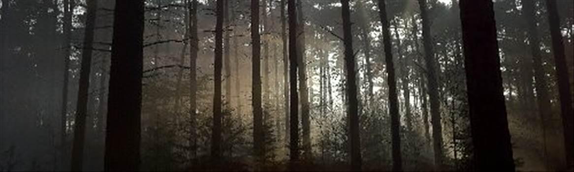 DARK FOREST.jpg by CraftyQueen