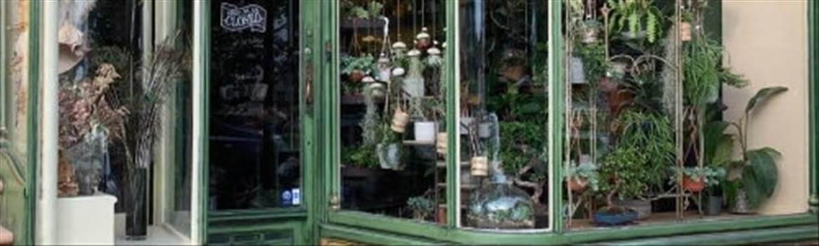 Burke\u0027s Botanics.jpg -