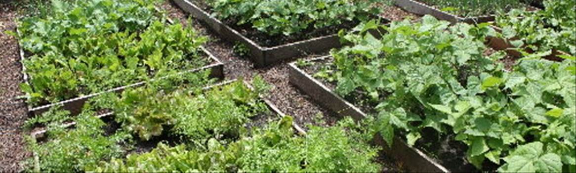 groundskeeper vegetable garden.jpg by CraftyQueen