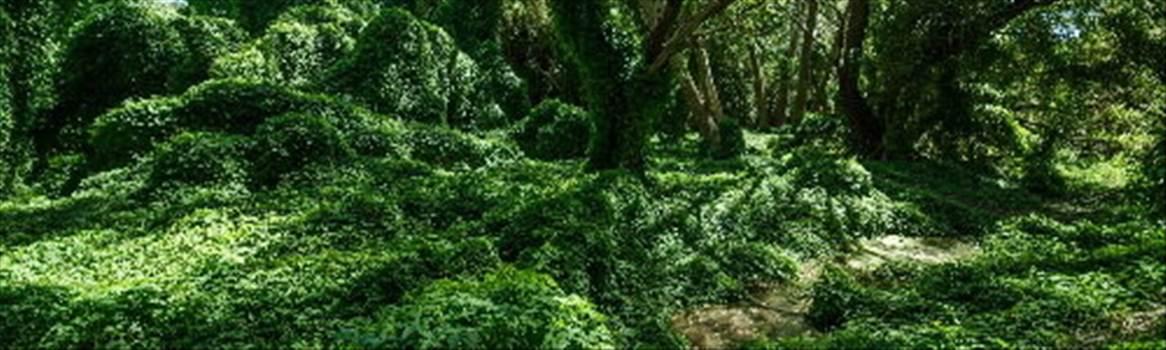 secret garden.jpg by CraftyQueen