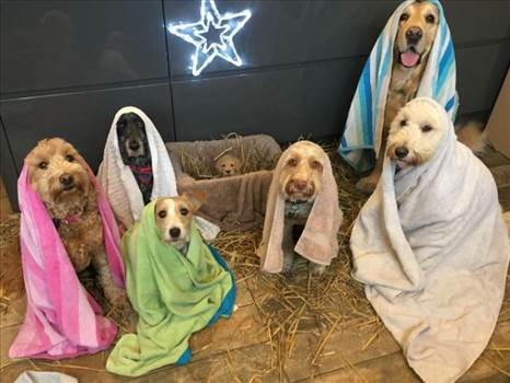 dog nativity.jpg by pjaye2000